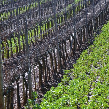 vigne-galleria-11