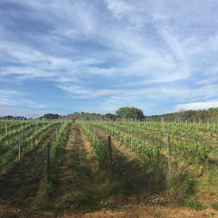 vigne-galleria-14